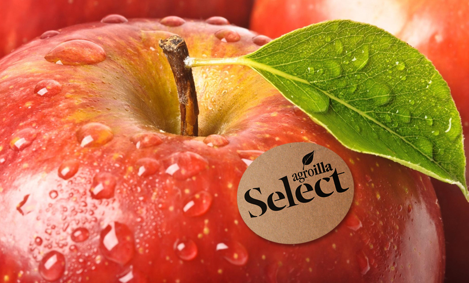 AGROILLA_SELECT_1